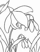 Flower Spring Flowers Coloring Snowdrop Drawing Bulb Line Doodles sketch template
