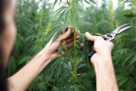 There are many kinds of insurance that business. Atlas General Insurance Launches Workers' Comp Program For California Cannabis Industry ...