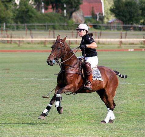 polo sport pony ponies sports