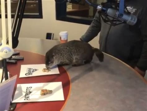 whmi  local news woody prepares  groundhog day