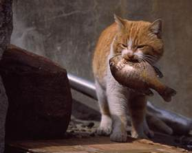 fish for cats cat food is all wrong ars technica openforum