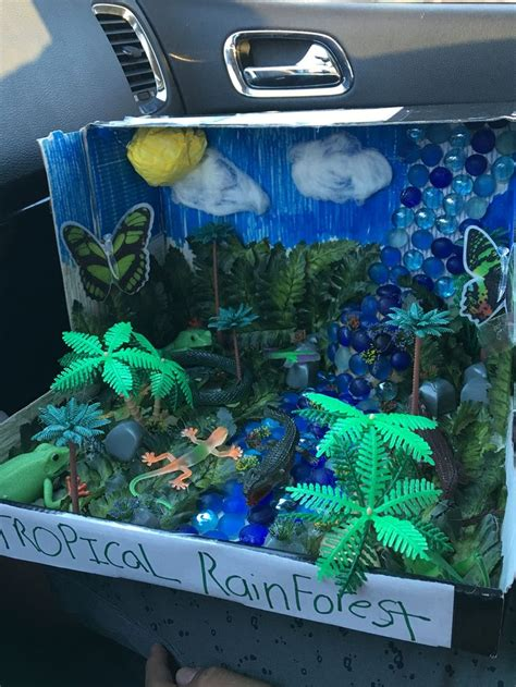 biome tropical rainforest project rainforest project