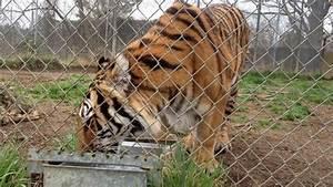 Carolina Tiger Rescue  Pittsboro