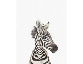 wandbilder babyzimmer schöne tierbilder für babyzimmer und kinderzimmer baby zebra schöne wandbilder für babyzimmer