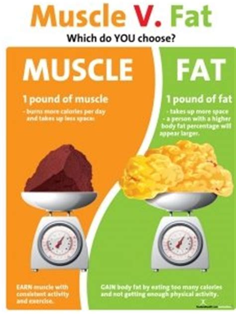 Amazon.com: Muscle Versus Fat Poster - 1 Pound Muscle