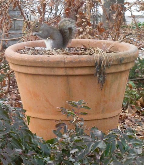 squirrel deterrent for gardens squirrel repellent furnish burnish