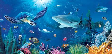 aquarium val d europe prix offre aquarium sea ticket semaine famille