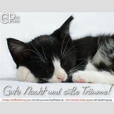 Coolphotosde  Gute Nacht (tiere)  Gute Nacht Und Süße
