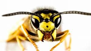 Wann Verlassen Wespen Ihr Nest : wespennest entfernen feuerwehr kosten ~ A.2002-acura-tl-radio.info Haus und Dekorationen