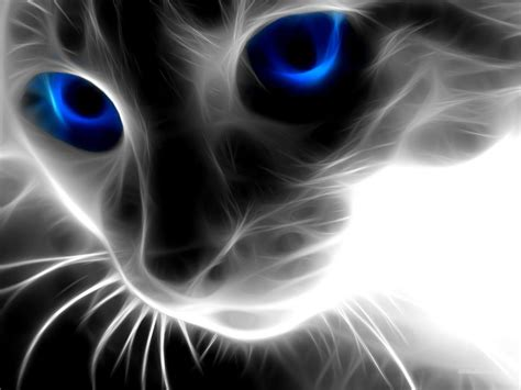 abstract cat animals hd wallpapers hd backgrounds