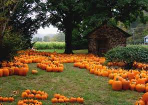 Pumpkin Patch Illinois 2015 by The Master Guide To Pumpkin Patches Corn Mazes And Orchard Farms In Illinois Freeport Il News