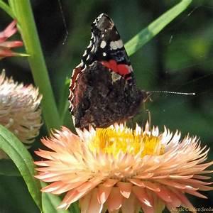 Colourful Nectar Plants  Organic