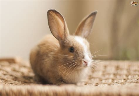 Best Pets For College Students Rabbit Hope Elephants Interiors Inside Ideas Interiors design about Everything [magnanprojects.com]