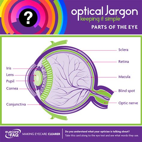 Parts Of The Eye Graphic Abdo