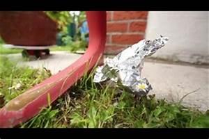 Marder Dachboden Was Tun : video marder im garten so vertreiben sie den ungewollten gast ~ Michelbontemps.com Haus und Dekorationen