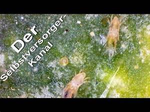 Ameisen Im Gewächshaus : florfliegenkasten ganz einfach selber bauen doovi ~ Lizthompson.info Haus und Dekorationen