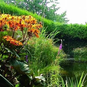 Pflanzkörbe Für Blumenzwiebeln : naturagart shop teich umfeld schattig hoch 20 online ~ Lizthompson.info Haus und Dekorationen