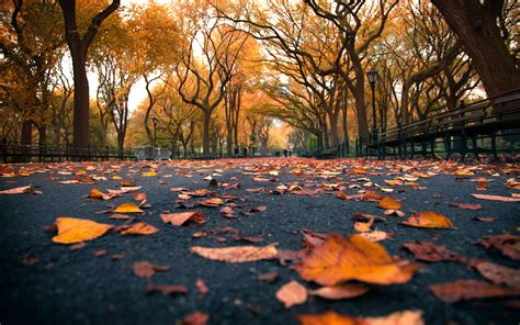 Fall Backgrounds New York by Autumn Beautiful Leaves Hd Desktop Wallpapers 4k Hd