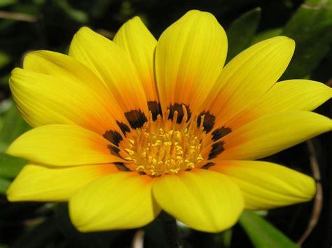 desktop flower wallpapers13 wallpapers