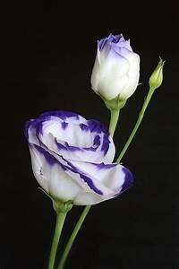 Hortensien In Heißes Wasser : 85 besten garten bilder auf pinterest blumen garten ~ Lizthompson.info Haus und Dekorationen