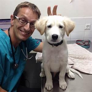 Veterinarians With Cute Animals   www.pixshark.com ...