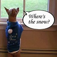Where's the snow? | Dogs Quote's ♥ | Pinterest