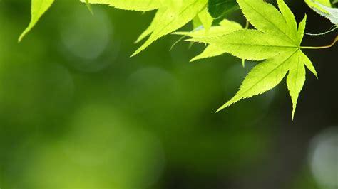 シンプル・緑の壁紙 緑色のシンプル写真 高解像度・高画質の