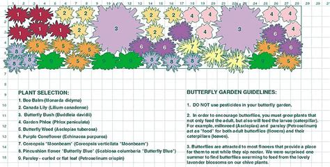 butterfly garden plan zone 5 and up gardening