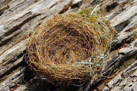 Homespun bliss: Bird nests