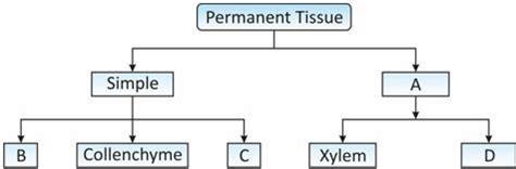 class ix science tissues activities