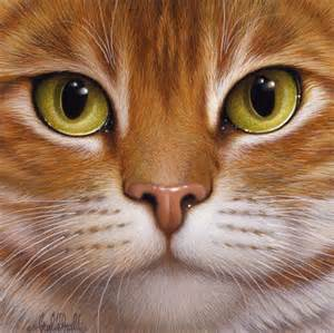 cat faces 25 best ideas about cat on cats pretty