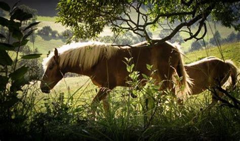 Arthrose Pferd Schmerzmittel