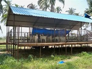 Suresh Devaraj Goat Farm: Goat Shed