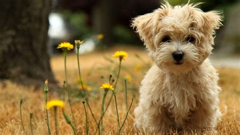 Customize your desktop, mobile phone and tablet with our wide variety of cool and interesting mobile wallpapers in just a few clicks! Cute Dogs And Puppies Wallpapers - Wallpaper Cave