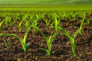 Bio Saatgut Kaufen : getreide online kaufen bestellen getreidehandel ~ A.2002-acura-tl-radio.info Haus und Dekorationen