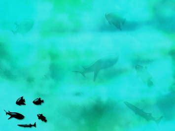 aquatic animals  powerpoint templates