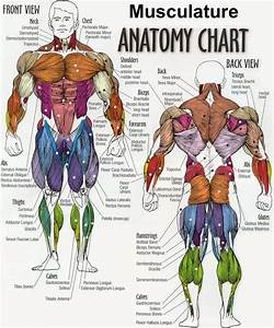 Fotos - Bodybuilder Anatomy