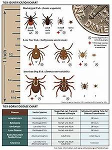 Body Types Chart Common Ticks In Fairfax County Health