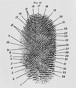 Proof   Evidence   Fingerprint As A Visual  This Is A