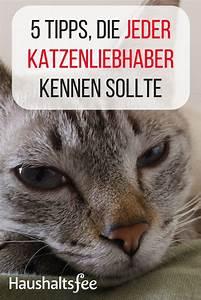 Katzenhaare Entfernen Kleidung : die besten 25 katzenhaare ideen auf pinterest katzenhaare entfernen reinigung hundehaar und ~ Orissabook.com Haus und Dekorationen