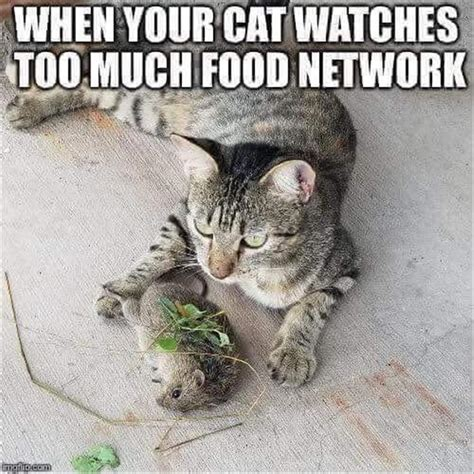 funny cats  cats  instagram