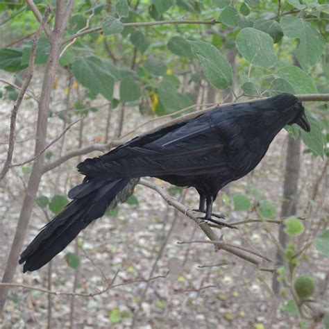 tuin simulator online kopen wholesale vos crow uit china vos crow
