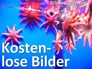 Bilder Blumen Kostenlos Downloaden : lizenzfreie bilder zur kostenlosen nutzung ~ Frokenaadalensverden.com Haus und Dekorationen