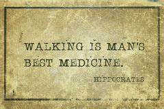 Hippocrates Sto... Ancient Medicine Quotes
