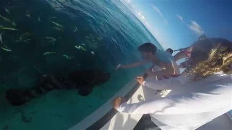 grouper goliath feeding