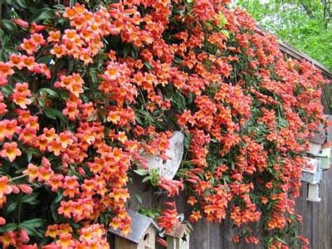 294 Best Plants For North Central Florida Images On