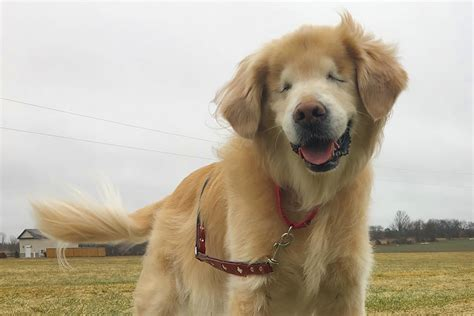 blindness in dogs this blind changes lives and racks up instagram likes