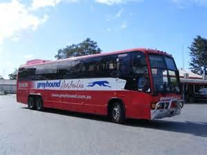 greyhound australia showbus com bus image gallery