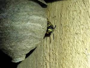 Welchen Geruch Mögen Wespen Nicht : wespen hornissen und andere plagegeister ~ Articles-book.com Haus und Dekorationen