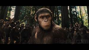 Rise Of The Planet Of The Apes Gorilla